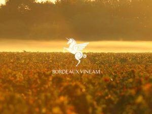 Teaser video pour Bordeaux Vineam