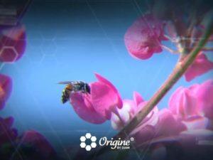 Teaser motion design Origine by Diam